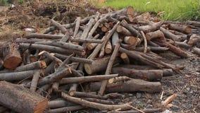 Group of firewood. Pan up shot stock video