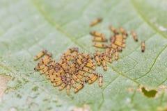 Group of moth caterpillars stock photos