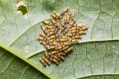Group of moth caterpillars royalty free stock images