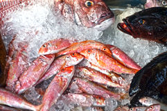 Group of fish on display. Red mullet and some other fish on the market's display for sale royalty free stock image