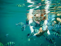 Group of fish eating banana from the hand of a woman. Underwater Royalty Free Stock Photography