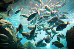 Group of fish i Stock Photography