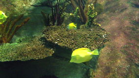 Group of fish under the sea, fish knife stock video footage