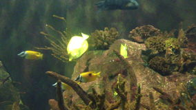 Group of fish under the sea, fish knife stock footage
