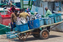 Group of fishermen at the port loading fish in the baskets stock photo