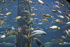 Group of Fishes Royalty Free Stock Images