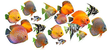 Group of fishes. On a white background royalty free stock photography