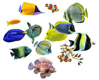 Group of fishes. On a white background stock photos