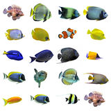 Group of fishes. On a white background stock photo