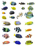 Group of fishes. Group of saltwater fishes on a white background stock image