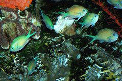 Group of fishes. In the aquarium Stock Photography