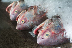 Group of fishes ready to Wholesale in fish market of Thailand. A group of fishes ready to Wholesale in fish market of Thailand Stock Image