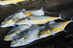 Group of fishes ready to Wholesale in fish market of Thailand. A group of fishes ready to Wholesale in fish market of Thailand Stock Photography