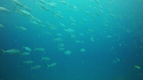Group of fishes swimming. Thailand stock video