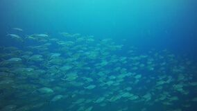 Group of fishes swimming. Thailand stock footage