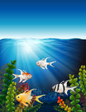 A group of fishes underwater Royalty Free Stock Photography