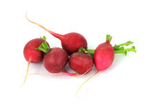 Group of Five Radishes Royalty Free Stock Images