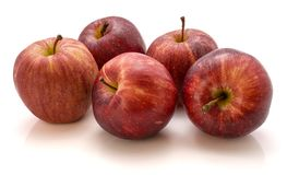 Gala apples  on white background. Group of five whole Gala apples  on white background Royalty Free Stock Photography