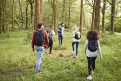 A group of five young adult friends talk while walking in a forest during a hike, back view stock photo