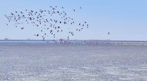 Group of flamingo flying away Stock Photography
