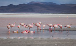 Group of flamingos Stock Photo