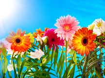 Group flower and blue sky. Royalty Free Stock Photography