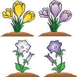 Group of flower - crocus and bluebell Royalty Free Stock Photos