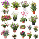 Group of flower plants Royalty Free Stock Photo