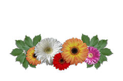 Group flowers daisies with green ivy leaves Royalty Free Stock Images