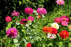 Group of flowers in a garden. Flowers blooming in the garden in mid-summer. Image of nature. Delicate and beautiful flowers stock photography