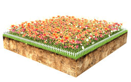 Group of flowers on a piece of land Stock Image