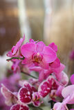 Group of flowers, purple orchid, phalaenopsis Stock Images