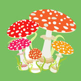Group with fly agaric, Amanita muscaria. Stock Photo