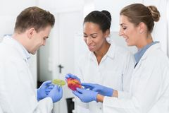 Group of food laboratory researchers comparing results royalty free stock photos