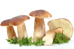 Group of forest mushrooms Stock Photo