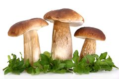 Group of forest mushrooms Royalty Free Stock Images