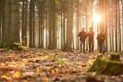 Free Group Foresters Walk In The Evening Through A Forest Stock Photography - 183308592