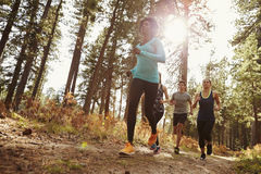 Group of four adults running in a forest, low angle view stock image