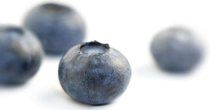 Group of four blueberries shot in extreme close-up the front blu Royalty Free Stock Images