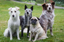 Group of four dogs. A Group of four different Dogs sitting in the backyard stock image