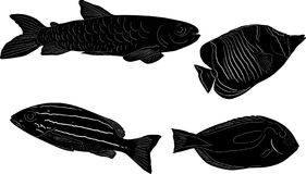 Group of four fish sketchs isolated on white. Illustration with set of fish sketchs isolated on white background Stock Image