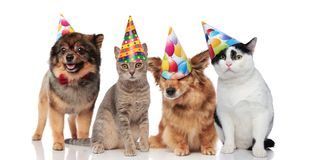 Group of four funny cats and dogs with birthday hats. Standing and sitting on white background stock photo