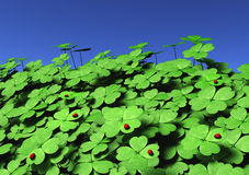 Group of four-leaf clovers with ladybugs Royalty Free Stock Image