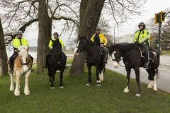 Group of four mounted policemen in bright green or yellow jackets. Group of four policemen in bright green or yellow jackets mounted on their horses in a semi stock photography