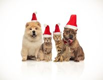 Group of four santa cats and dogs of different breeds. Sitting on white background and panting royalty free stock photos