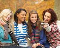 Group Of Four Teenage Girls Taking Picture. With Camera Sitting On Bench In Autumn Park Royalty Free Stock Image
