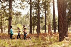 Group of four young adult friends running in a forest stock image