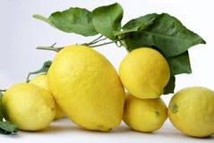 Group of Amalfi lemons isolated on white background. Group of fresh Amalfi lemons with leaves isolated on white background Stock Photo