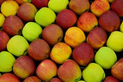 Group of fresh apples Royalty Free Stock Images