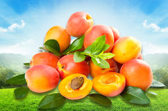 Group of fresh apricot Stock Photos